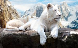 Белоснежный лев в горах небо белый обои скачать на рабочий стол выского качества категории животные