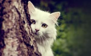 Белый кот за деревом карие глаза красивый