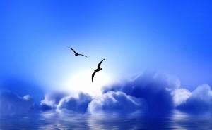 Синии облака графика чайки