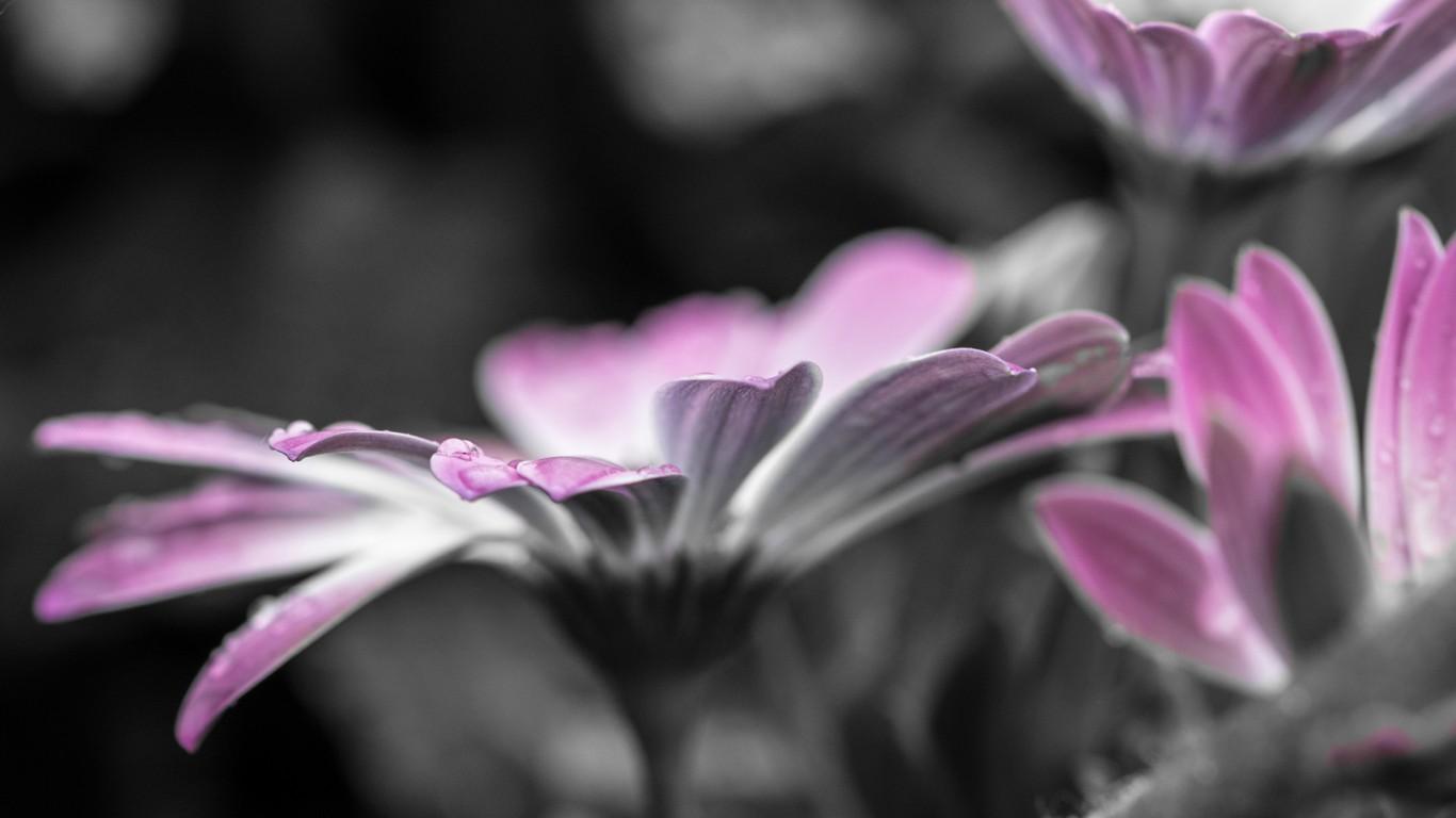 <p>Цветок с каплями росы</p>