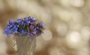Цветы фиалки фон серый на рабочий стол скачать обои высокого качества