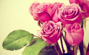 Розы скачать обои на рабочий стол розовые нежность