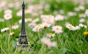 Эйфелева башня ромашки поле цветы макро Макро на рабочий стол обои скачать крупные рисунки широкоформатные обои
