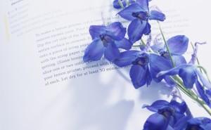 Дельфиниум цветы на рабочий стол скачать синие