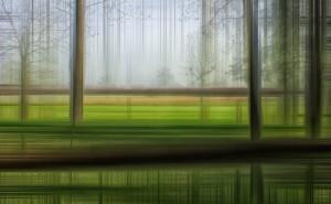 размытый лес дизайн графика