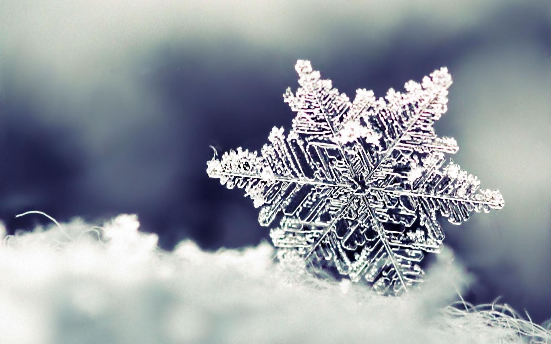 <p>Макро снежинки</p>
