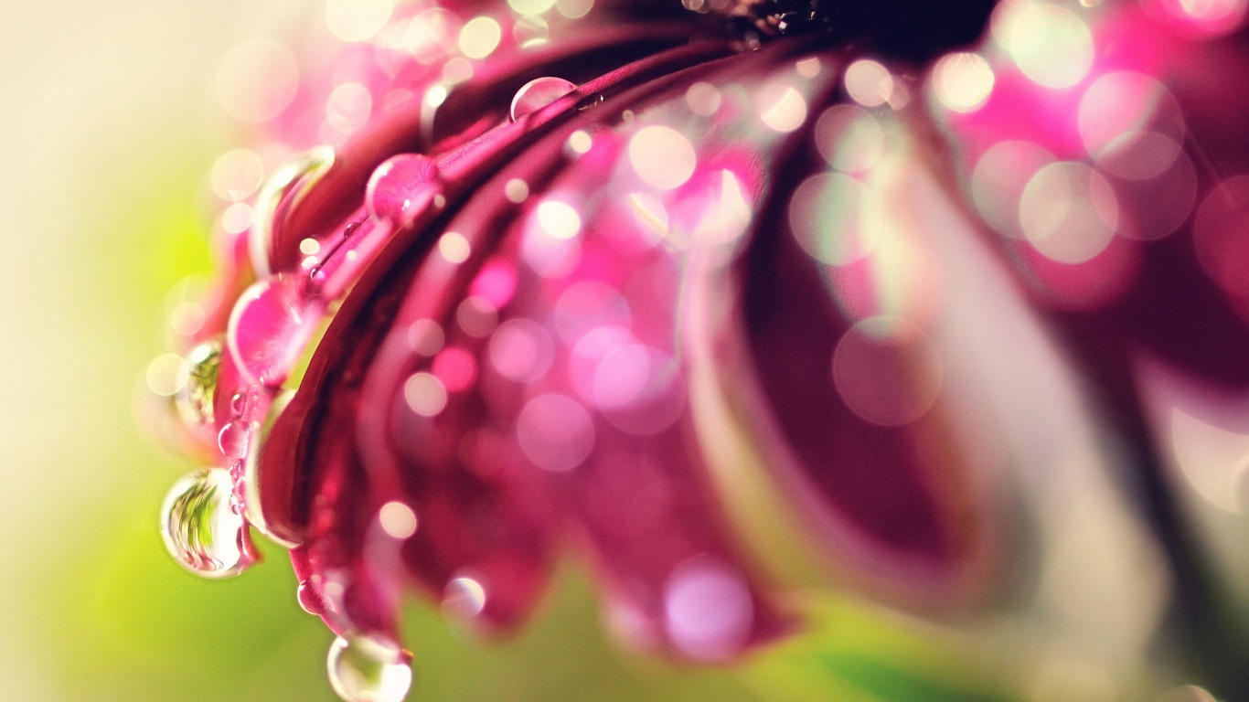 <p>Цветок капли росы</p>