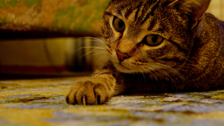 <p>Кот</p>