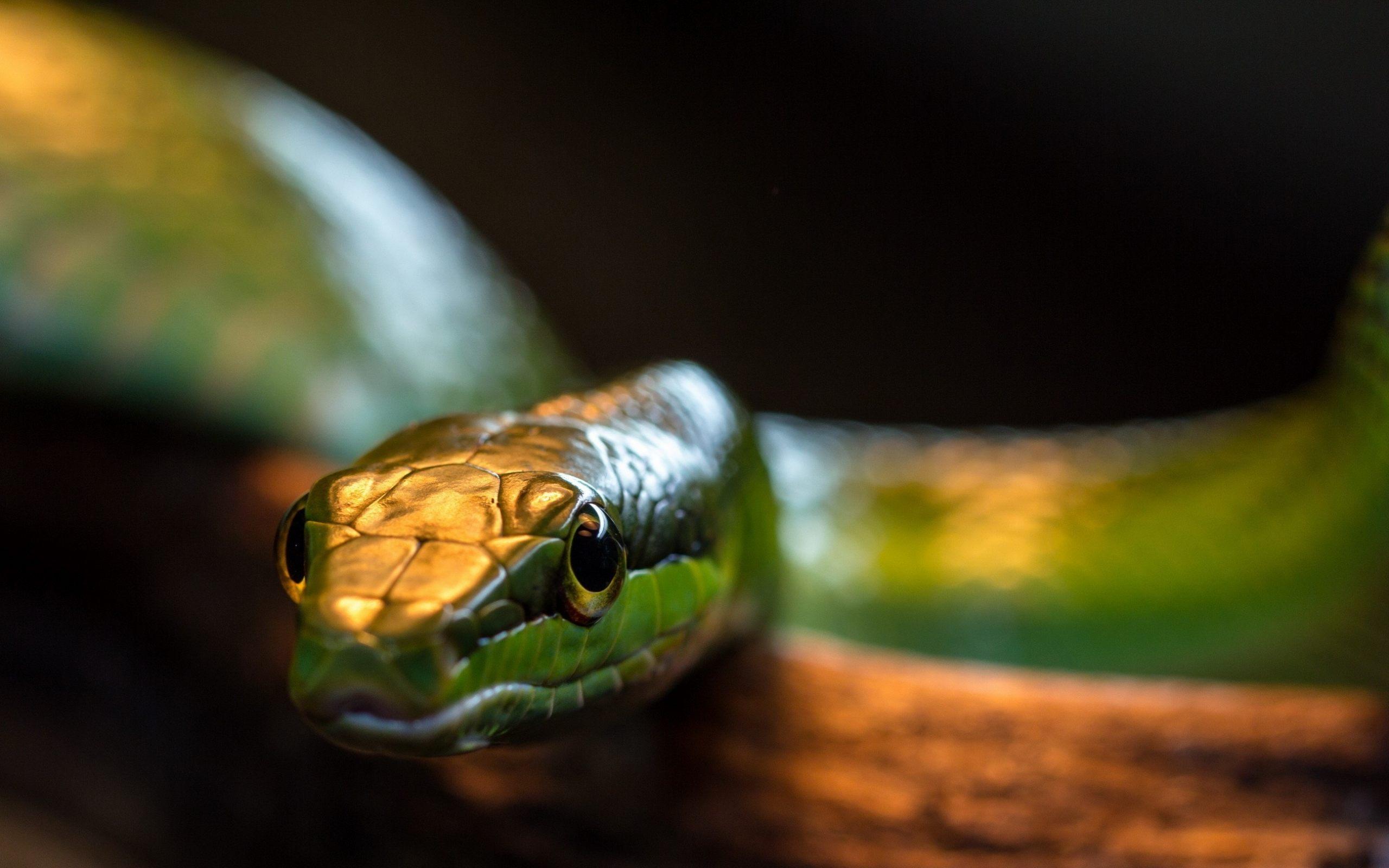 <p>Змея</p>