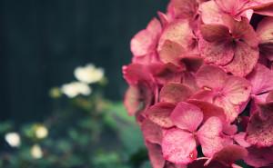 Цветы на рабочий стол