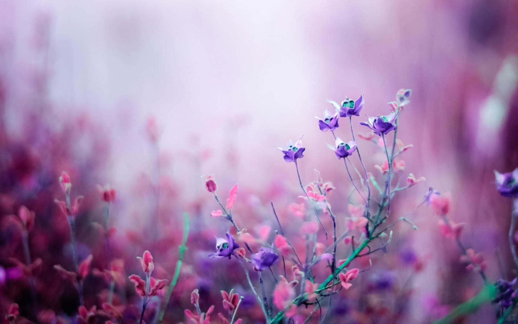 <p>Фиолетовые цветы</p>