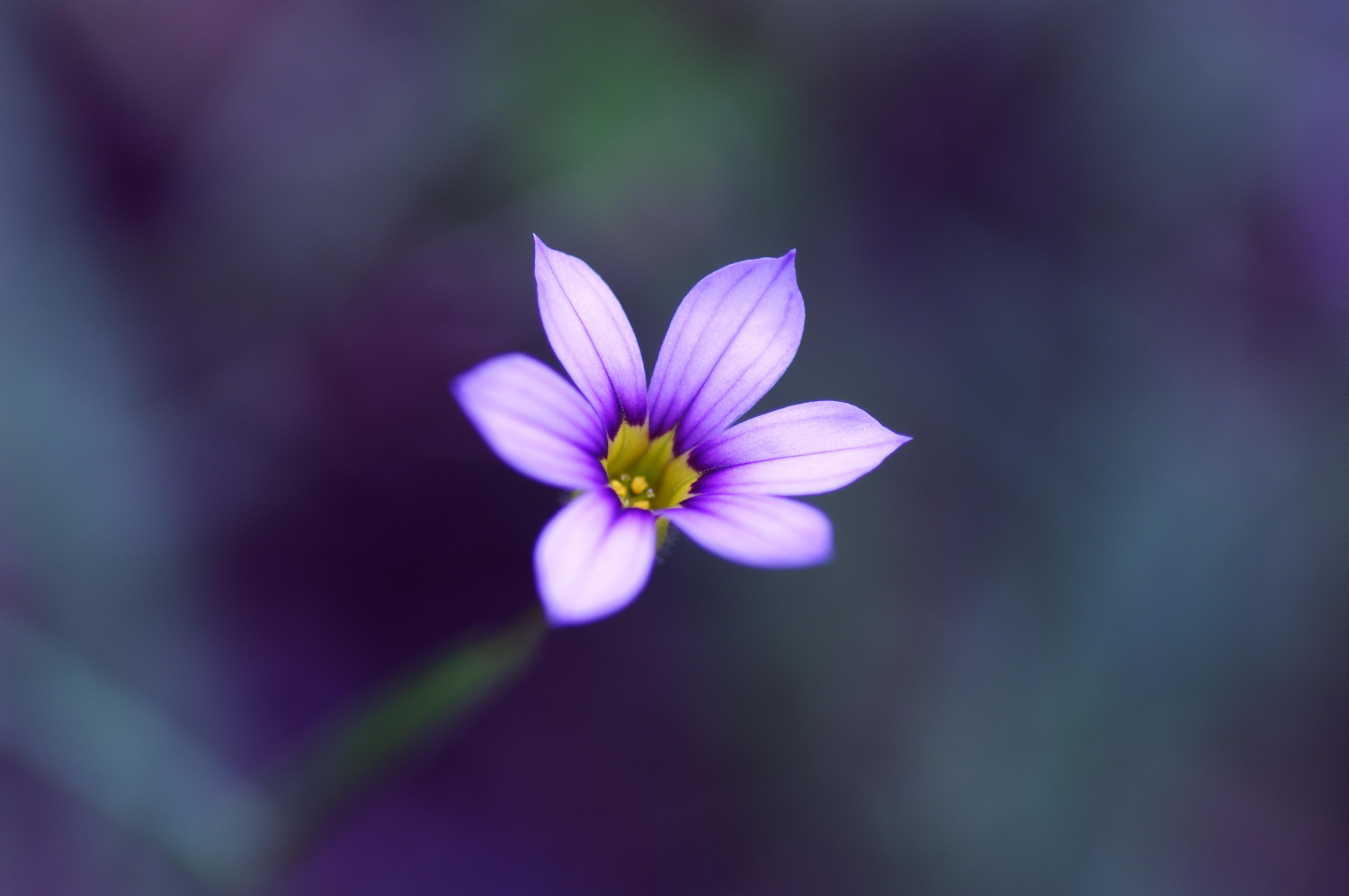 <p>Цветок</p>