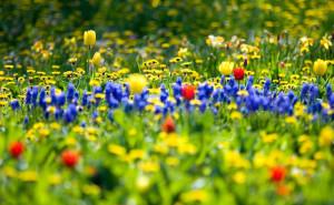Полевые цветы Полевые цветы на рабочий стол скачать синие желтые красные