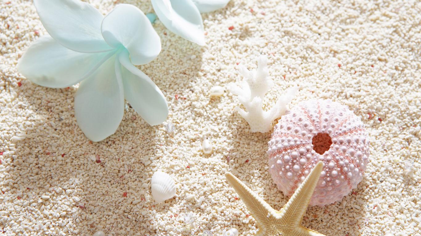 <p>Ракушки и пляж</p>