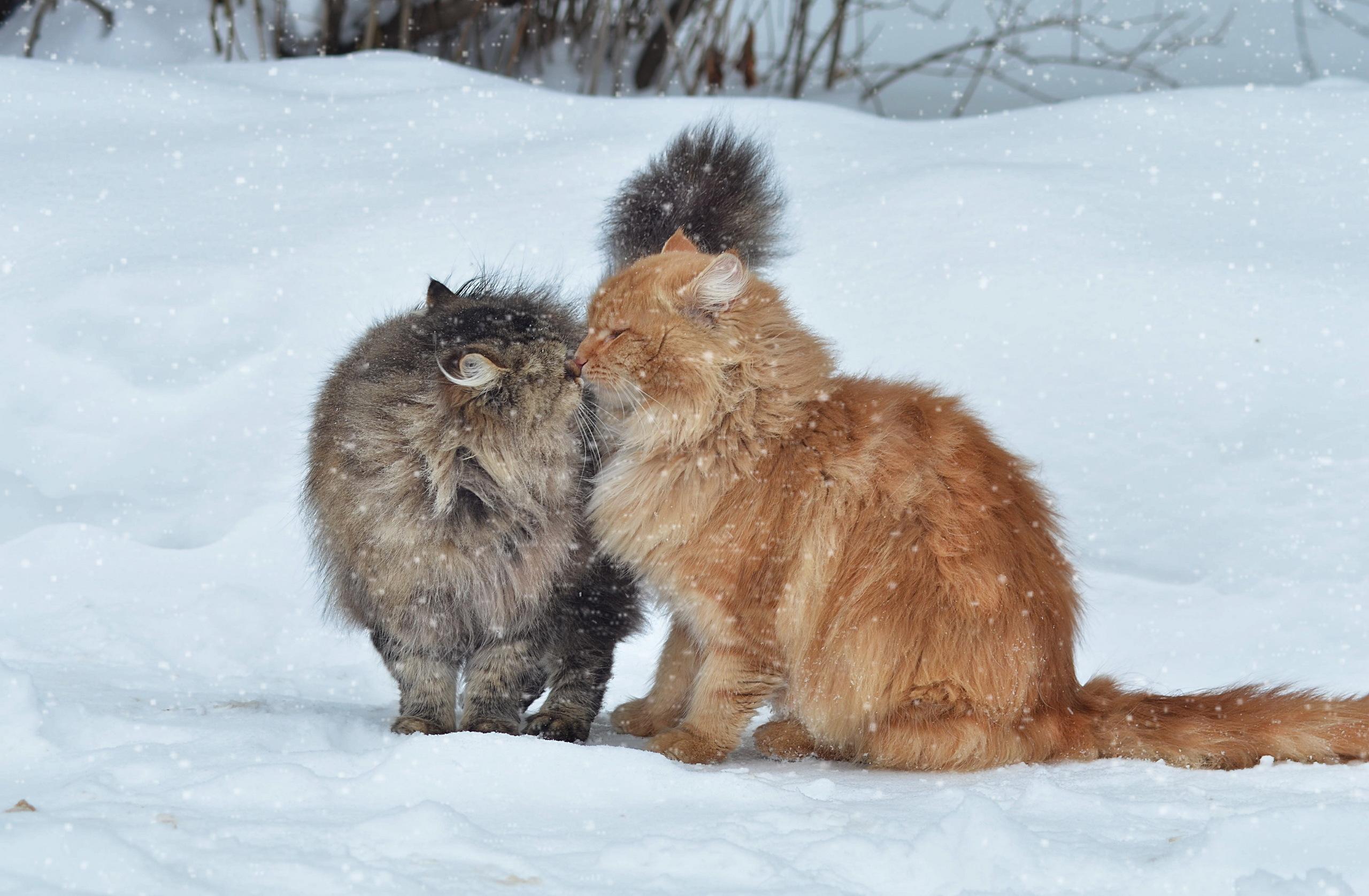 <p>Кошки</p>