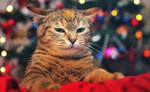 Кот под елкой Кошки на рабочий стол обои скачать высокого качества на рабочий стол новый год