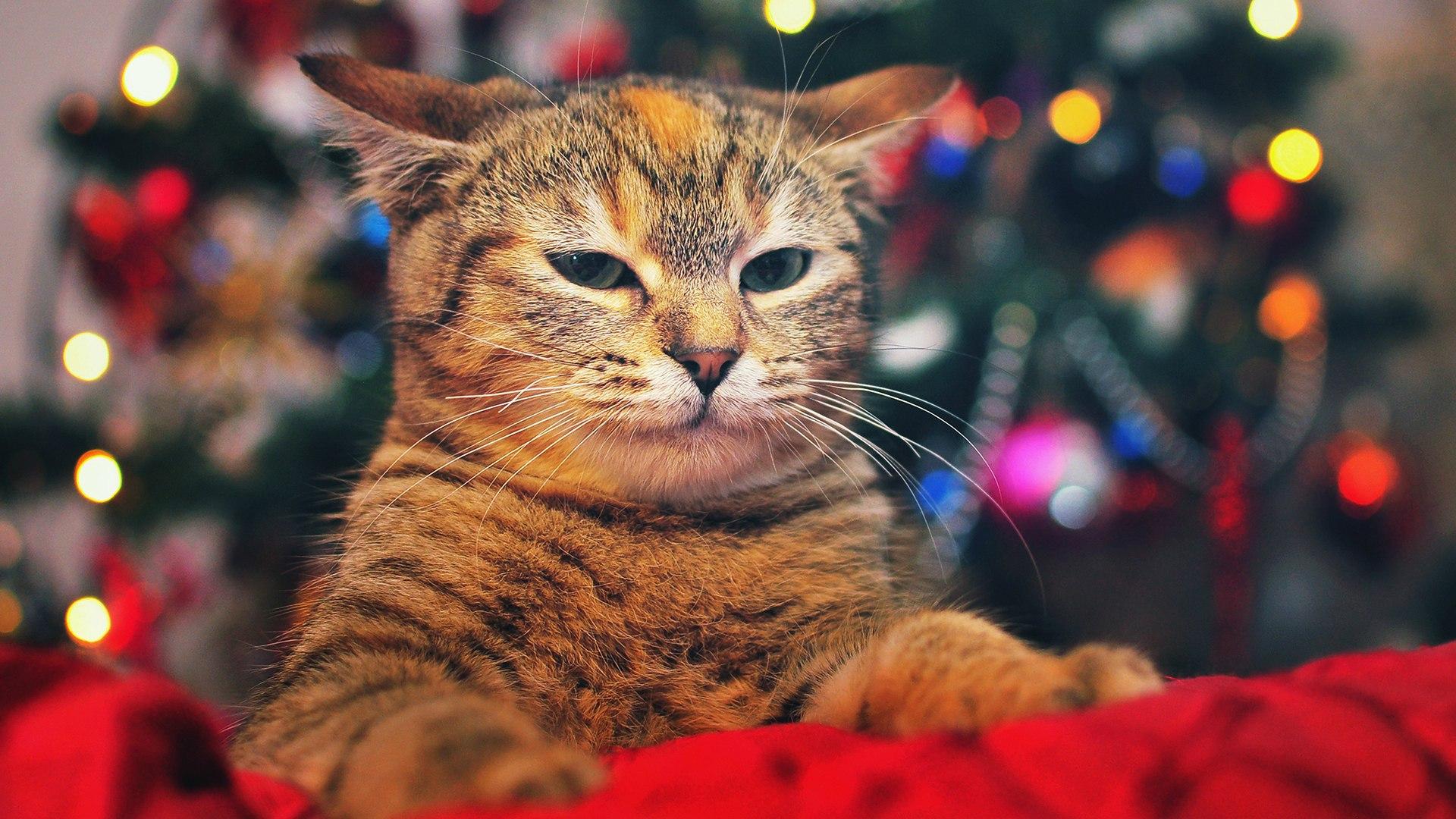 <p>Кот под елкой</p>