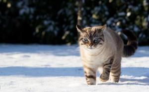 Серый кот зимой в снегу