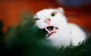 Белый кот под елкой на новый год