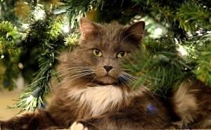 Пушистый серый кот под елкой на новый год