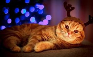 Рыжий кот под елкой на новый год
