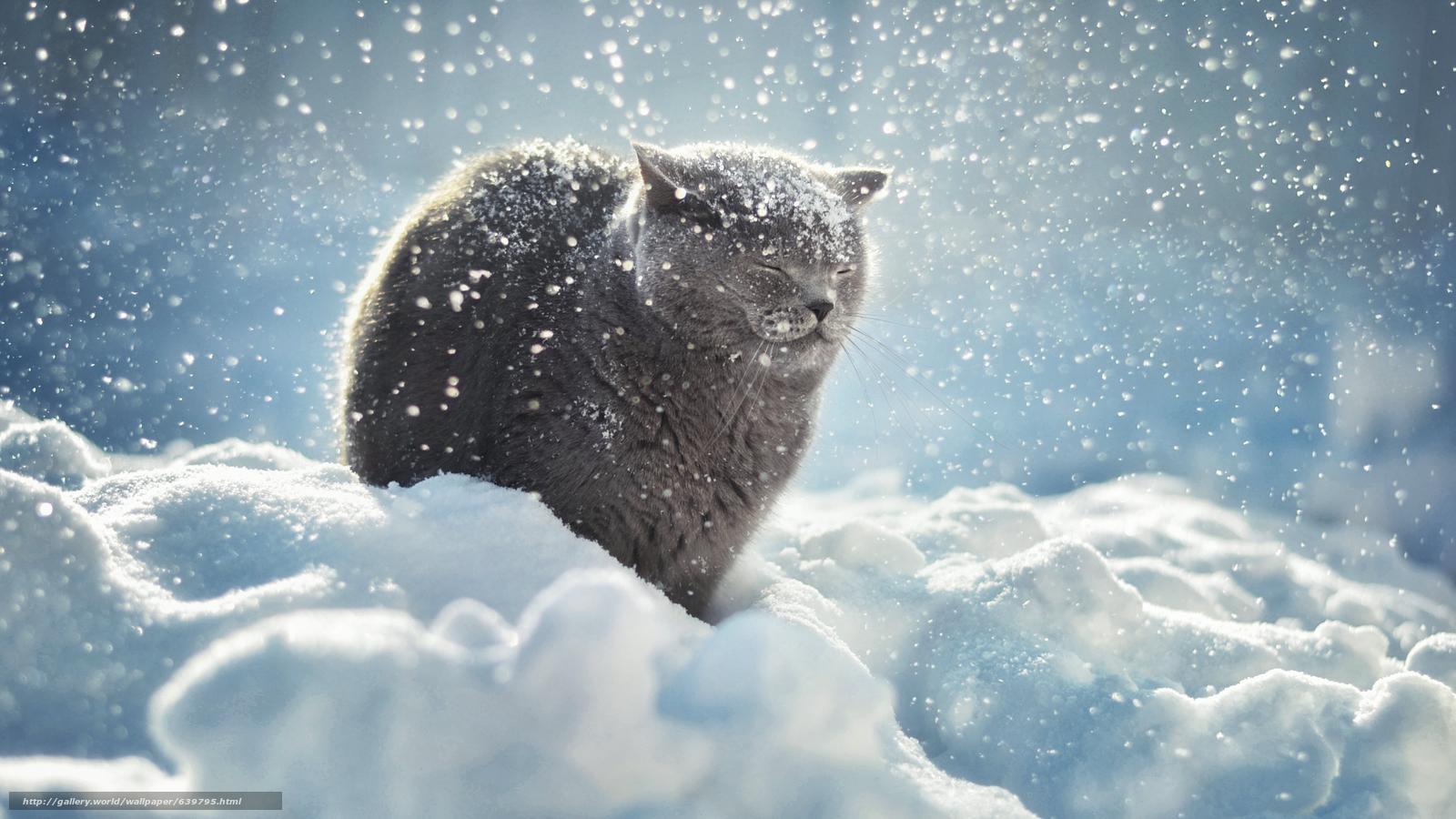 <p>Серый кот.</p>
