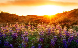 Цветочная поляна пейзаж обои высокого качества на рабочий стол