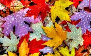 Осенние листьяразноцветные