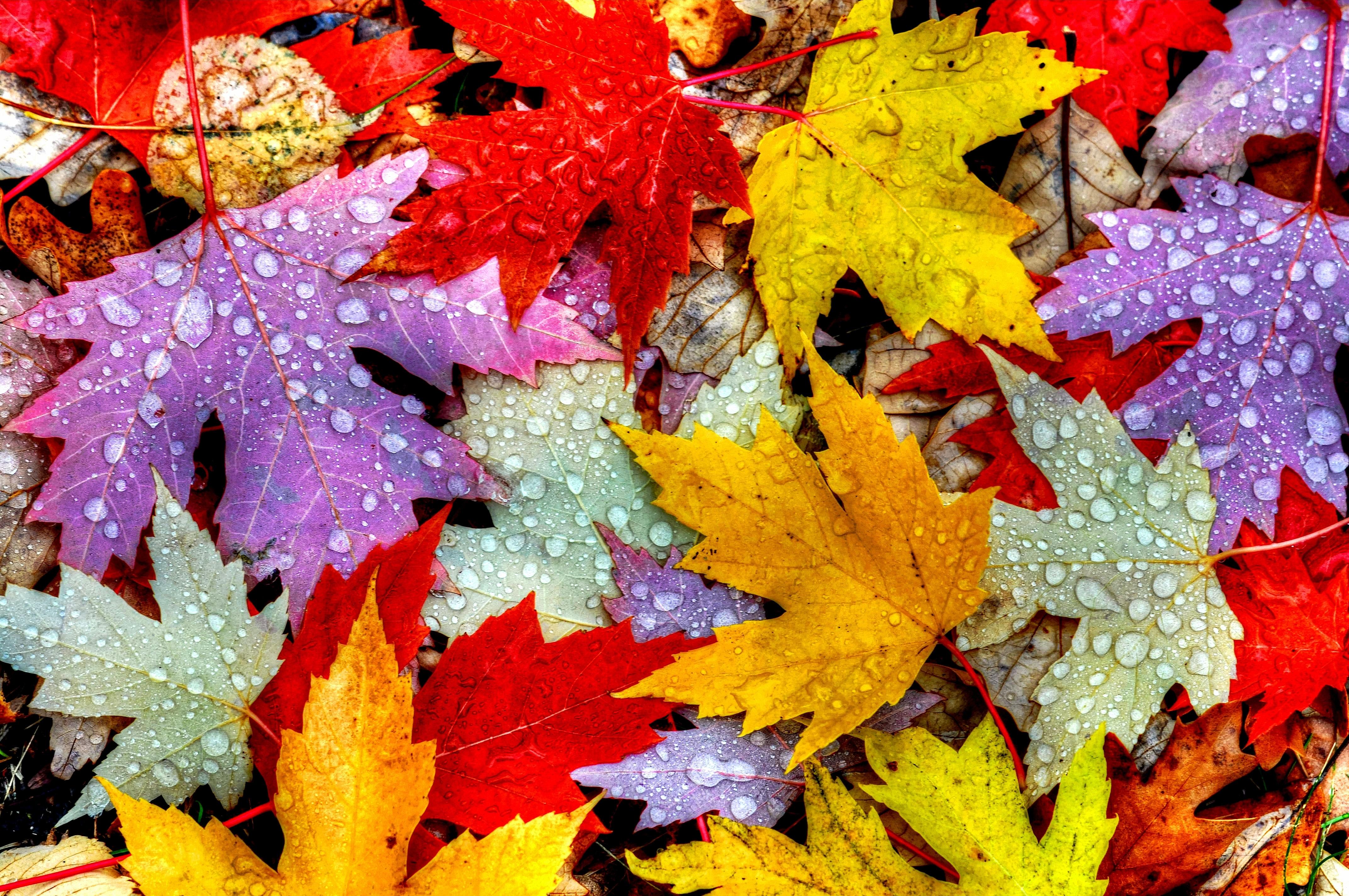 <p>Осень</p>