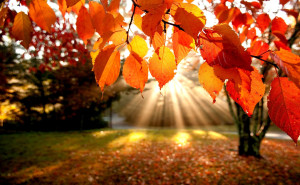 Осенние листья на ветке