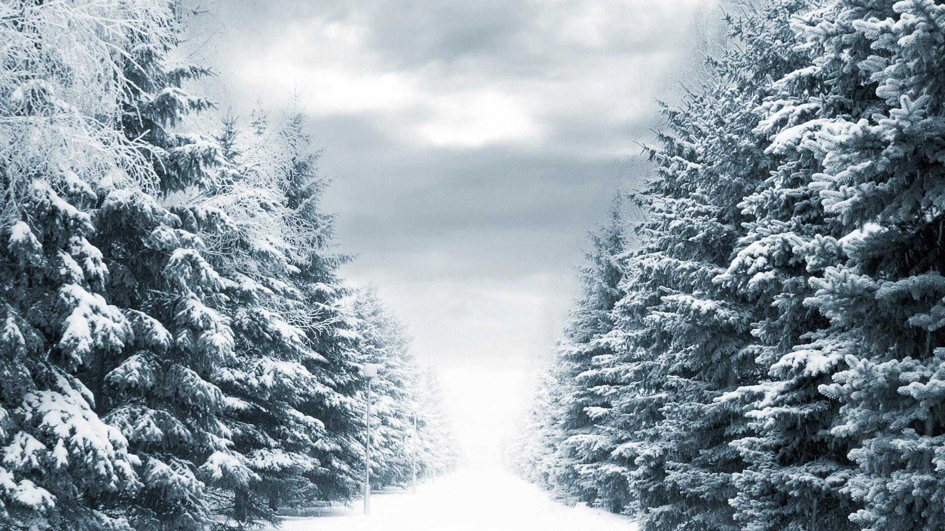 <p>Елки зимой</p>