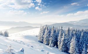 Зимний лес, елки, снег