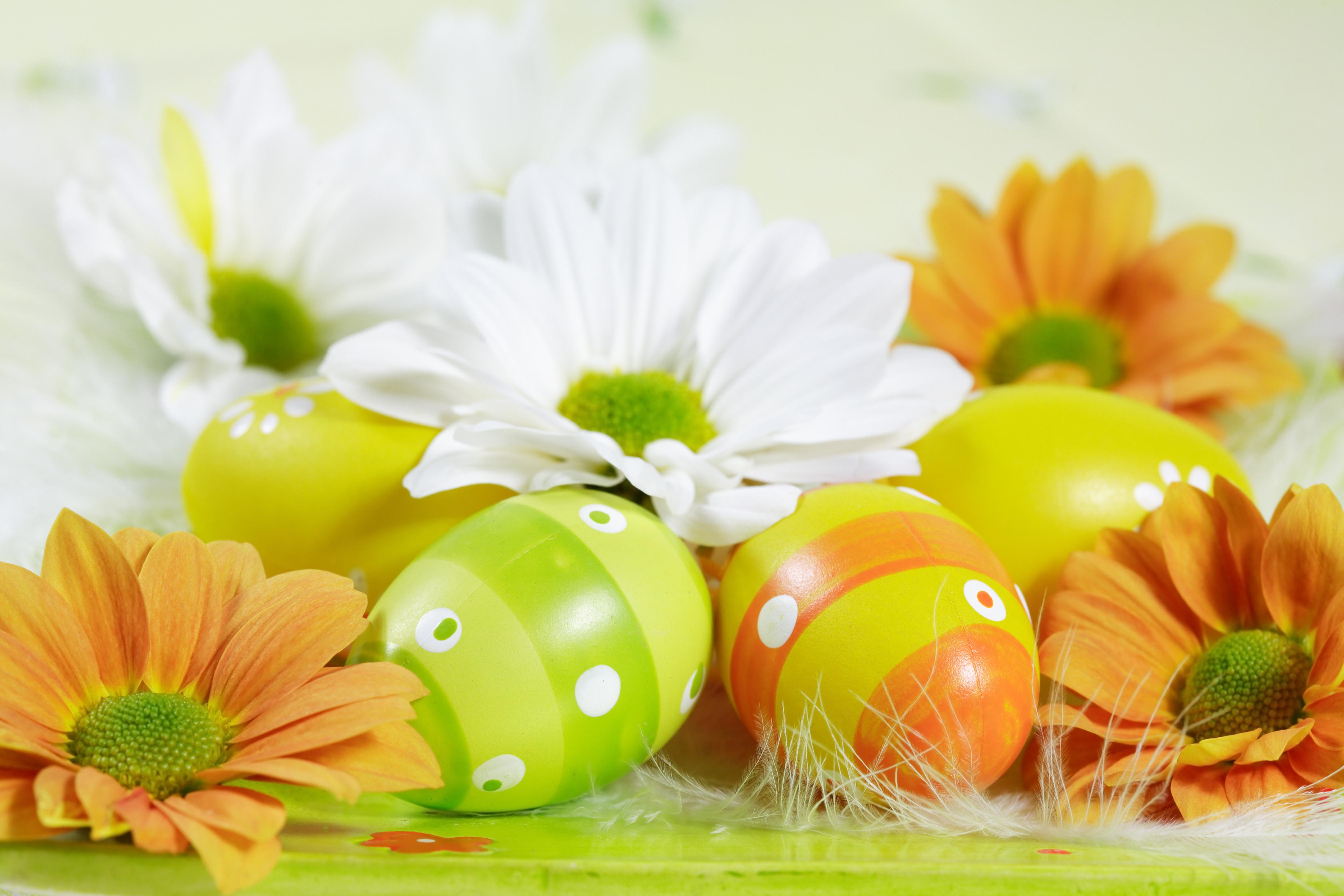 <p>Цветные яйца</p>