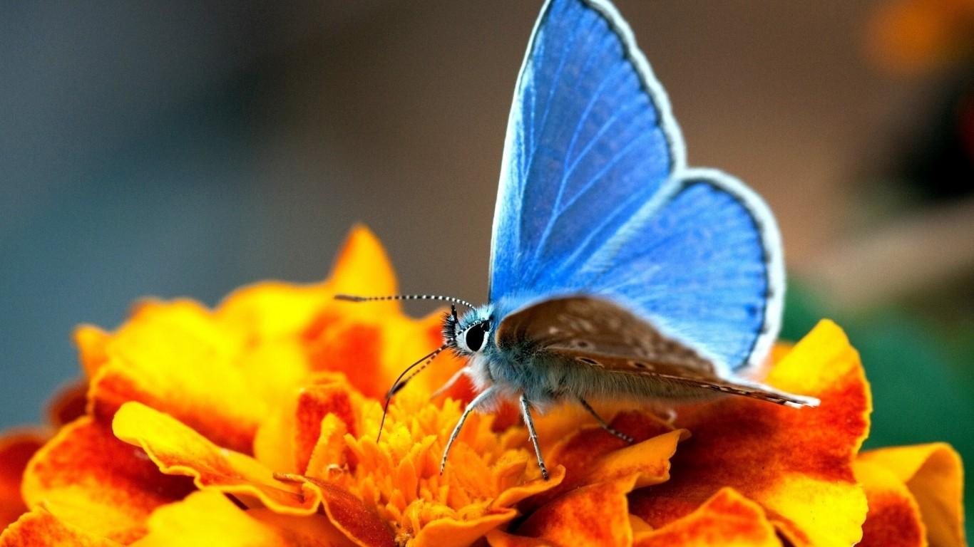 <p>Бабочка на цветке</p>