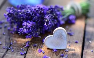 Букет лаванды сердце макро любовь