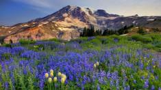 Горы и цветы желтые синие фиолетовый небо трава зеленый