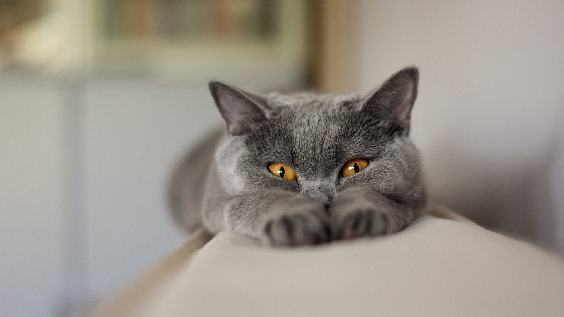 <p>Котик</p>