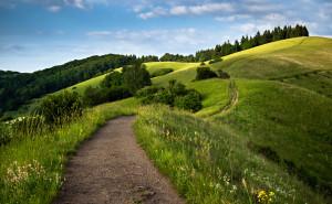 Путь, ведущий через холмы , Кайзерштуль , Баден- Вюртемберг , Германия, дорого деревья поле трава небо