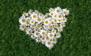 Ромашки сердце зеленый фон трава любовь романтика любовь романтика обои выского качества скачать на рабочий стол