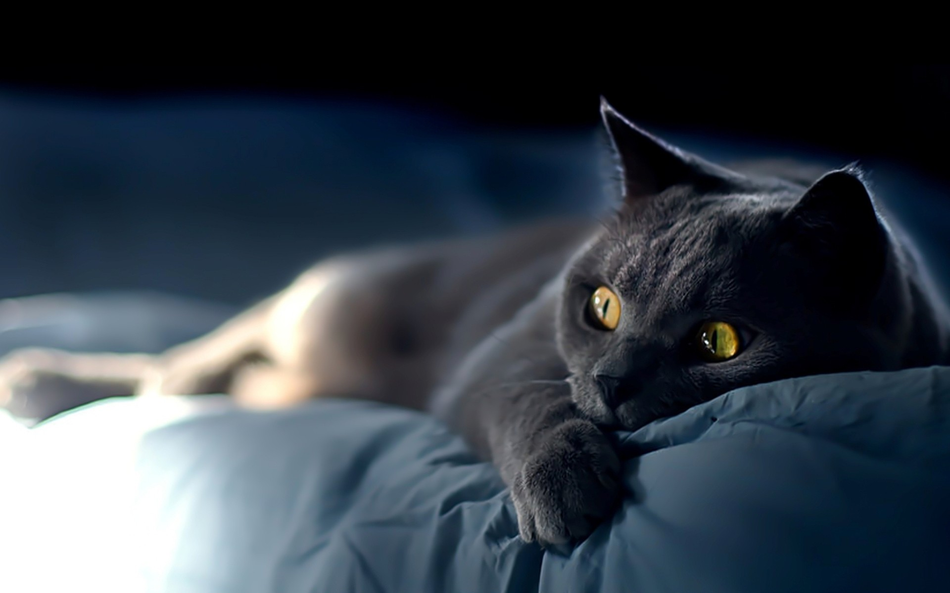Картинки котов на обои