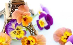 Цветы виола анютины глазки на рабочий стол скачать обои высокого качества оранжевые фиолетовые