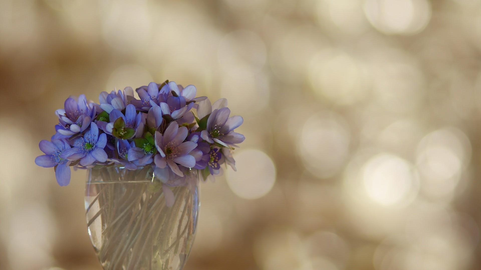 <p>Цветы фиалки</p>