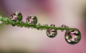 макро капли розовый фон отражение