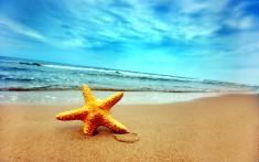морская звезда на пляж море обои на рабочий стол
