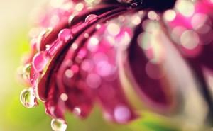 Цветок капли росы Макро на рабочий стол обои скачать крупные рисунки широкоформатные обои