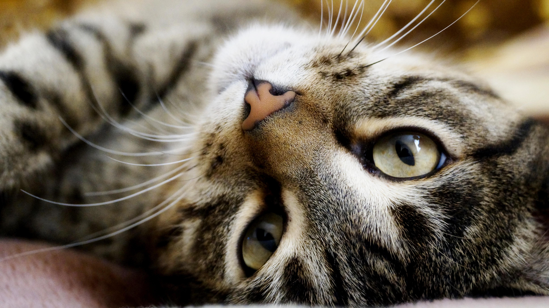 <p>Кот </p>