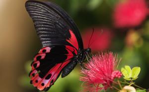 Бабочка обои скачать на рабочий стол выского качества категории животные насекомые бабочки