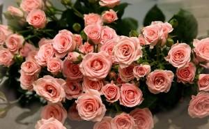 розы на рабочий стол скачать
