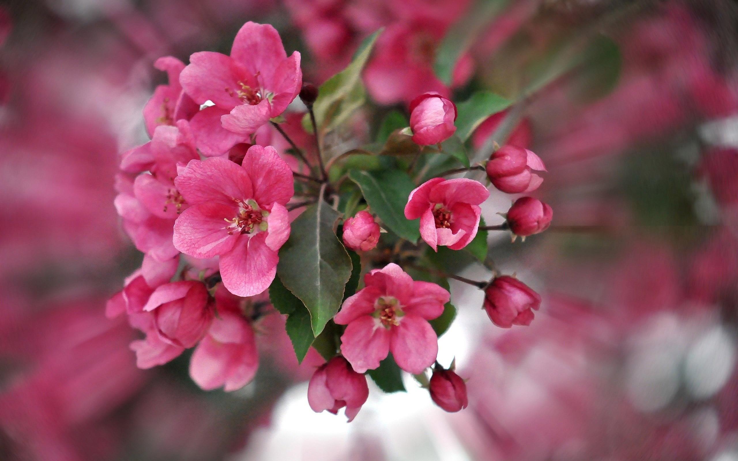 <p>Цветы </p>