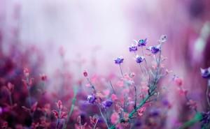 Фиолетовые цветы на рабочий стол скачать макро